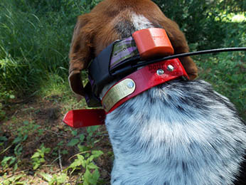 Garmin T5 Collar on Dog