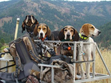 Shop for Hounds